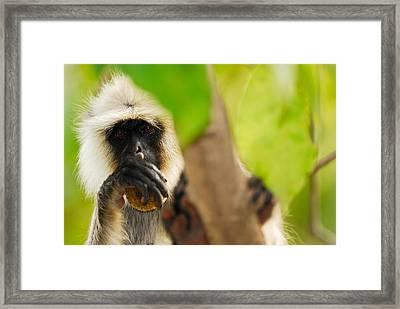 Monkey See Framed Print