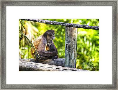 Monkey Sitting Framed Print by Stephanie Hayes