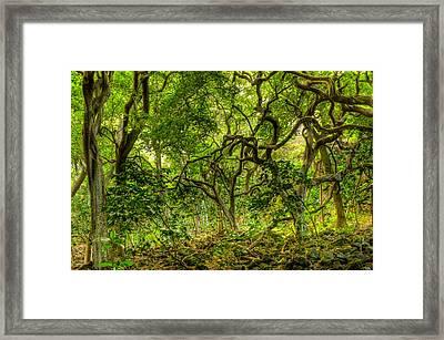 Monkeypod Forest Framed Print by Kim Kornbacher