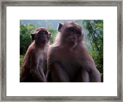 Monkey's Attention Framed Print by Kaleidoscopik Photography