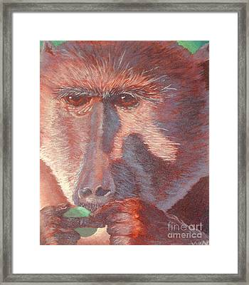 Monkey's Lunch Framed Print by Whitney Morton