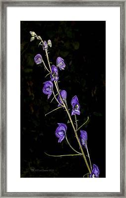 Monkshood Framed Print