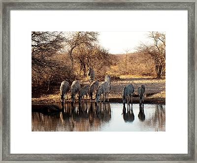 Monochromatic Friends  Framed Print