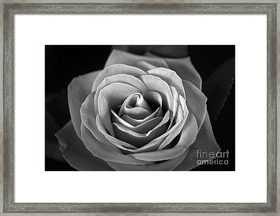 Monochromatic   Framed Print