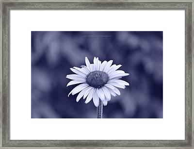 Monochrome Aster Framed Print by Sonali Gangane