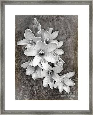 Monochrome Freesia Canvas Grunge Framed Print by Kaye Menner