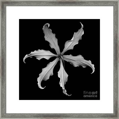 Monochrome Glory Lily Framed Print