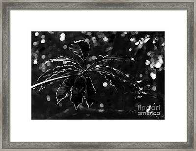 Monochrome Leaf  Framed Print