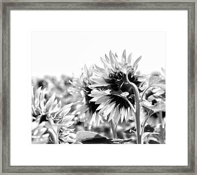 Monochrome Summer Framed Print by Georgia Fowler