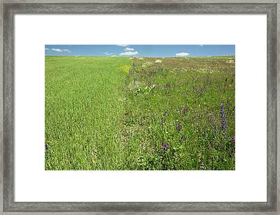 Monoculture And Fallow Fields Framed Print