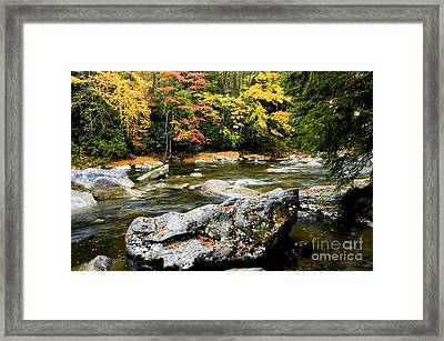 Monongahela National Forest Cranberry River Framed Print by Thomas R Fletcher