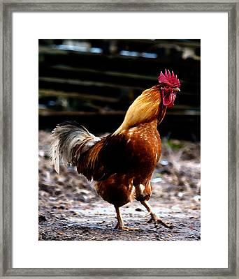 Monsieur Coq Framed Print