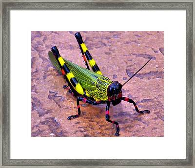 Monster Framed Print by Bob Wall