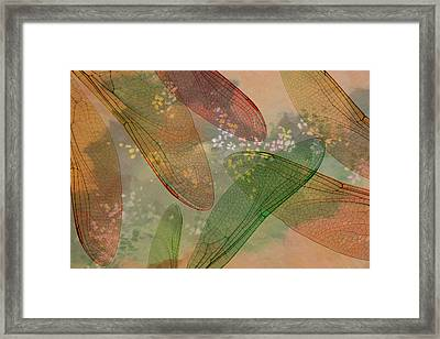 Montage Abstract Of Dragonfly Wings Framed Print