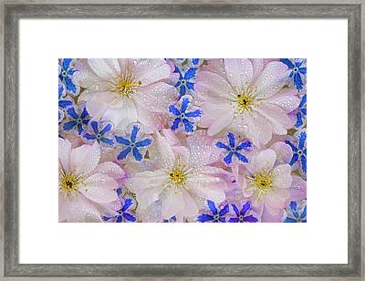 Montage Of Cherry Blossoms And Blue Framed Print