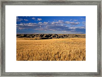 Montana   Field And Hills Framed Print
