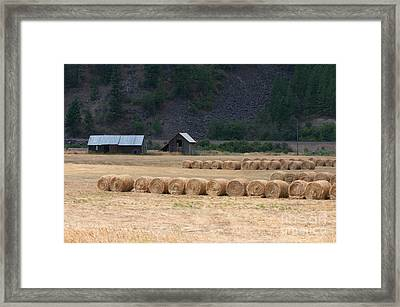 Framed Print featuring the photograph Montana Hay Harvest by Vinnie Oakes