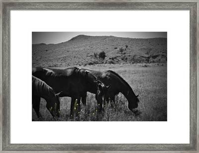 Montana Horses Framed Print