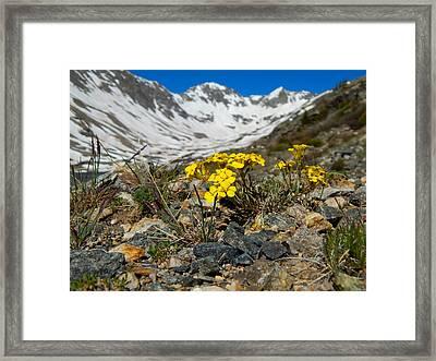 Blue Lakes Colorado Wildflowers Framed Print by Dan Miller