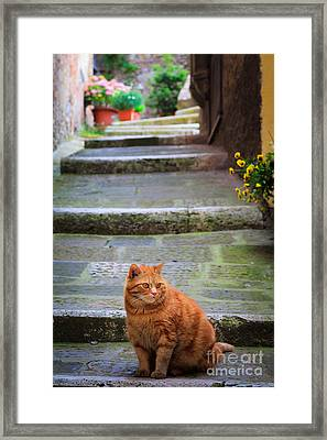 Montepulciano Cat Framed Print by Inge Johnsson