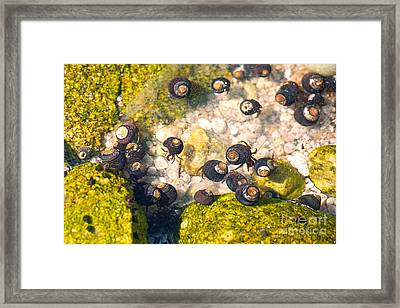 Monterey Bay Tide Pools Framed Print by Artist and Photographer Laura Wrede