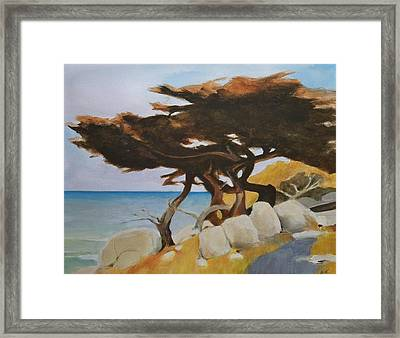 Framed Print featuring the painting Monterey Cypress by Ed  Heaton