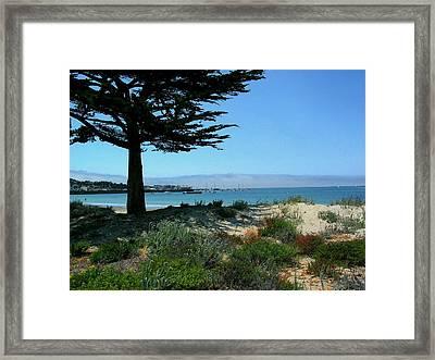 Monterey Dunes Framed Print