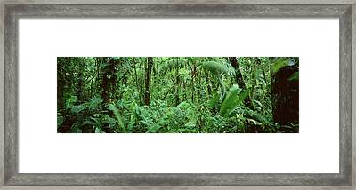 Monteverde Cloud Forest Reserve, Costa Framed Print by Panoramic Images
