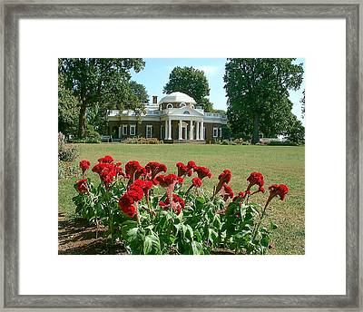 Monticello Cockscomb In Bloom Framed Print