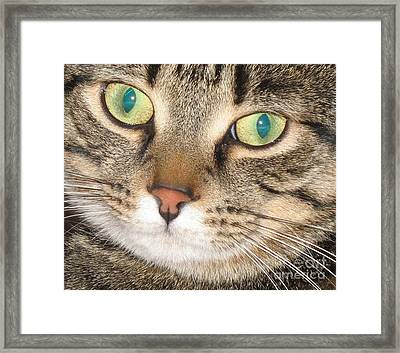 Monty The Cat Framed Print by Jolanta Anna Karolska
