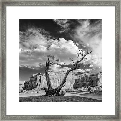 Monument Valley Juniper Tree And Mesa Framed Print by Silvio Ligutti
