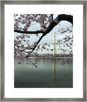 Monumental Blossoms Framed Print by Zachary Hitchcock