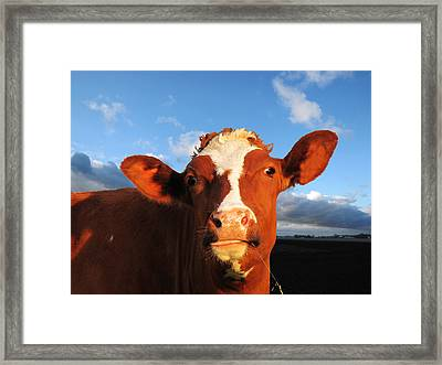 Moo Don't Say Cow Framed Print