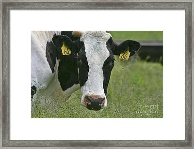 Moo Moo Eyes Framed Print