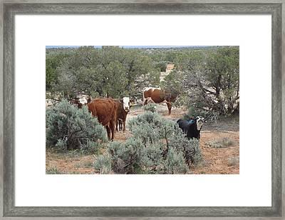 Moo Framed Print by Susan Woodward