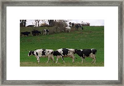 Moo Train Framed Print