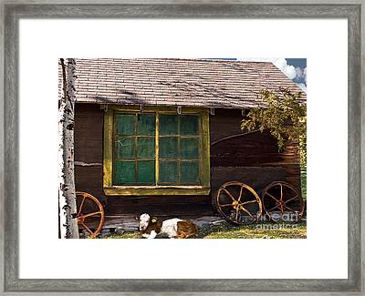 Framed Print featuring the photograph Moo Twenty-two by Sandi Mikuse