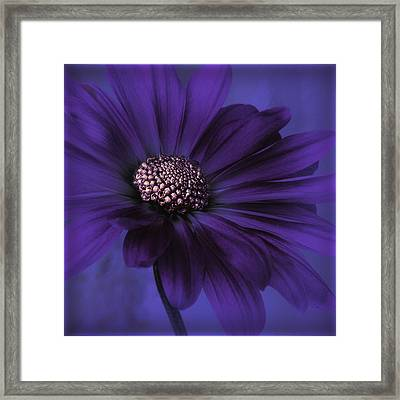 Mood Indigo Framed Print