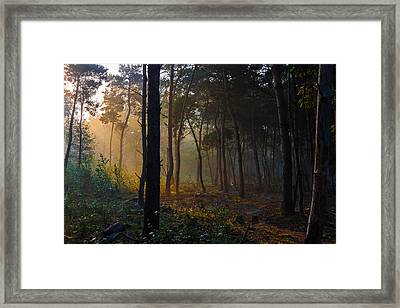 Moody Forest Happy Sun Framed Print by Semmick Photo