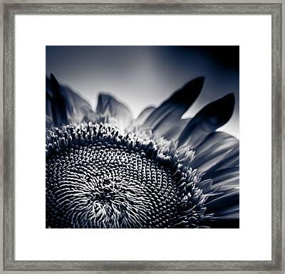 Moody Sunflower Framed Print by Isabel Laurent