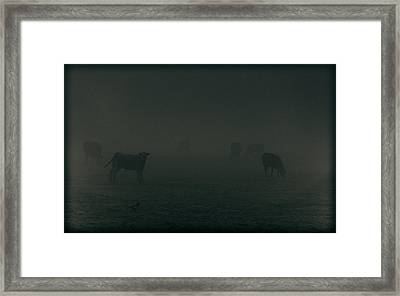 Mooing In The Mist Framed Print by Chris Fletcher
