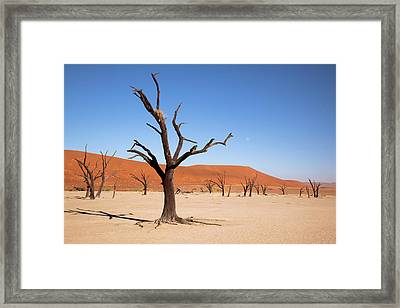 Moon And Tree With Nest, Dead Vlei Framed Print