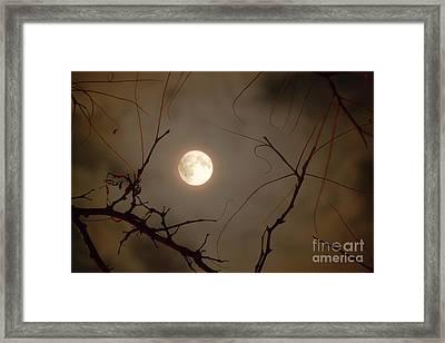 Moon Behind Branches Framed Print by Deborah Smolinske