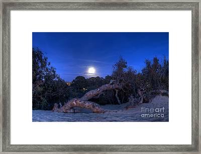 Moon Branch Framed Print