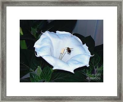 Framed Print featuring the photograph Moon Flower by Thomas Woolworth