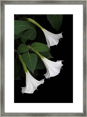 Moon Flowers Setting Framed Print by Angie Vogel