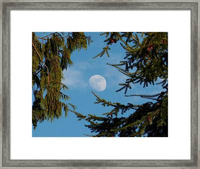 Moon Framed By Trees Framed Print by Karen Molenaar Terrell