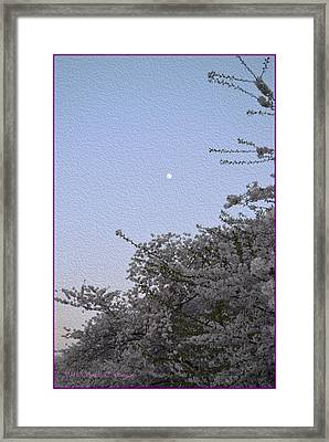 Moon In Cherry Blossom Framed Print by Sonali Gangane