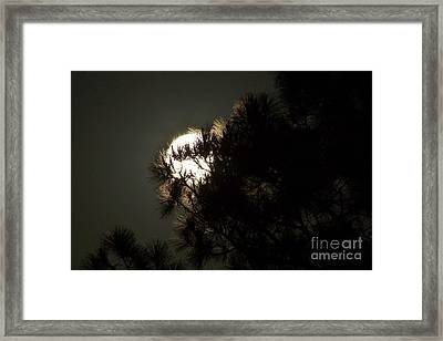 Moon In The Pines Framed Print