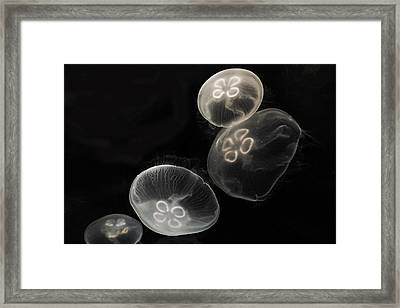 Moon Jellies Japan Framed Print